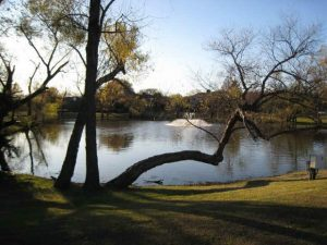 pond in lucas, texas