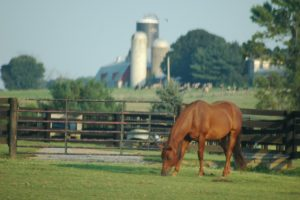 royse city texas horse