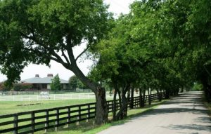 parker-texas-768x488